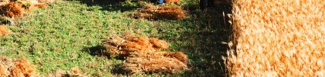 Sozial nachhaltige Integration von Menschen mit Behinderung (MmB) in die Arbeitsprozesse von Gartenbaubetrieben