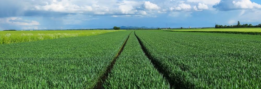 Fossilfreie Landwirtschaft – Utopie oder erstrebenswertes Ziel?